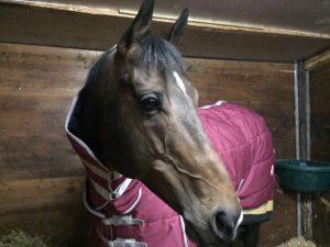 theault horsebox hire
